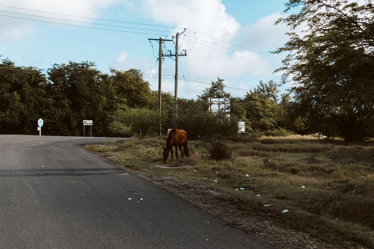horse at street