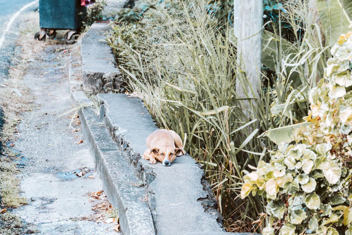 dog at street